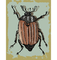 vintage background with beetle vector image