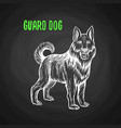 guard dog in chalk style on blackboard vector image