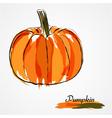 Pumpkin fruit vector image