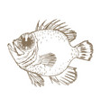 exotic ocean fish vector image