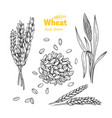 wheat hand drawn vector image