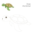 Draw the sea animal turtle educational vector image