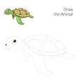 Draw the sea animal turtle educational vector image