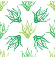 pattern with aloe vera for decoration vector image