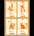 Animal banner with Monkeys for web design 1 vector image
