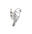 Hand drawn bird on a twig vector image