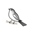 Hand drawn sparrow on a twig vector image