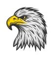 Proud eagle head Color version vector image vector image
