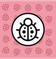 ladybug icon sign and symbol on pink background vector image