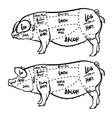 Pork cuts diagram and butchery set vector image