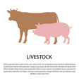 livestock poster with pink pig and cow silhouettes vector image