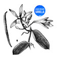 vanilla plant hand drawn botanical vector image