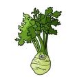 Cartoon celery with root vector image
