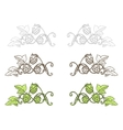 Hops ornament vector image