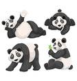 Panda in four different poses vector image