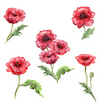 watercolor painting of set poppies vector image vector image