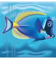 Exotic fish Acanthurus vector image