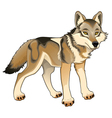 Wolf isolated character vector image