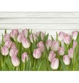 Beautiful pink and white tulips EPS 10 vector image