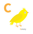 Letter C Canary bird Zoo alphabet English abc with vector image
