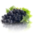 sprig of grapes triangle design vector image