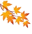 Autumn leaf maple branch vector image