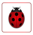 Ladybug red cartoon icon realistic vector image
