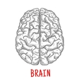 Top view of human brain sketch style vector image