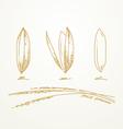 Rice grains Sketch hand drawn vector image