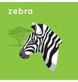Zebra on green backdrop vector image