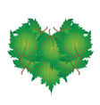 Green Maple Leaves in A Heart Shape vector image