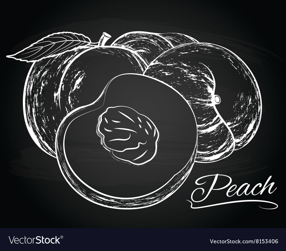 Tasty peaches vector