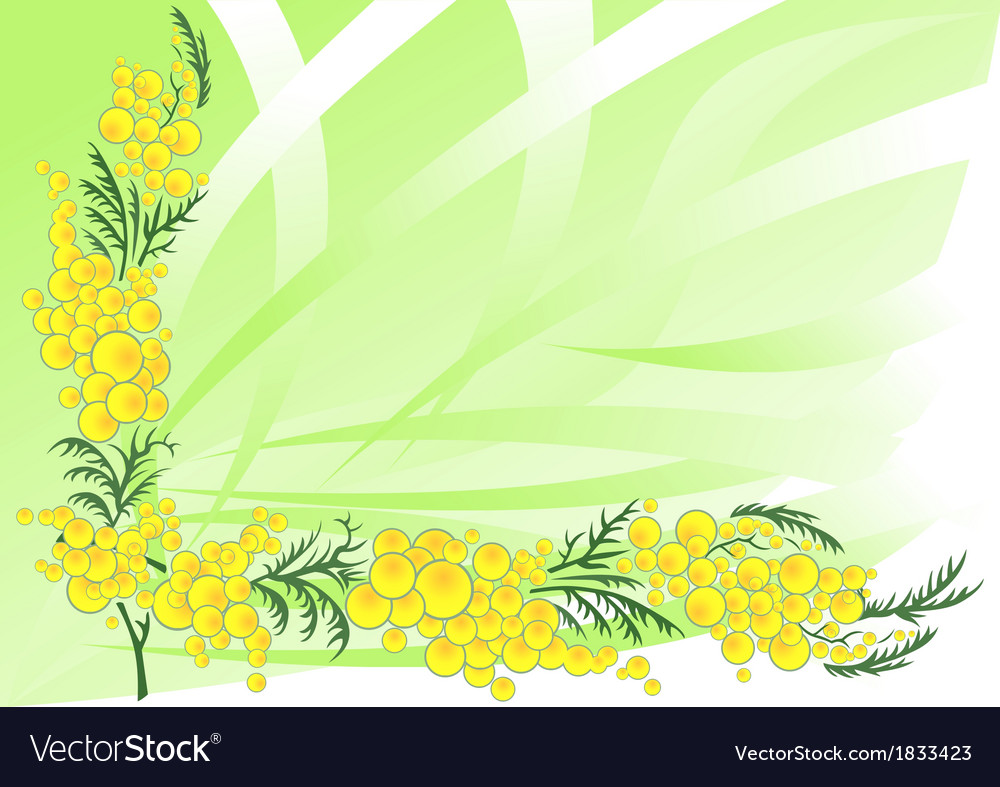 Abstract mimosa branches with background vector