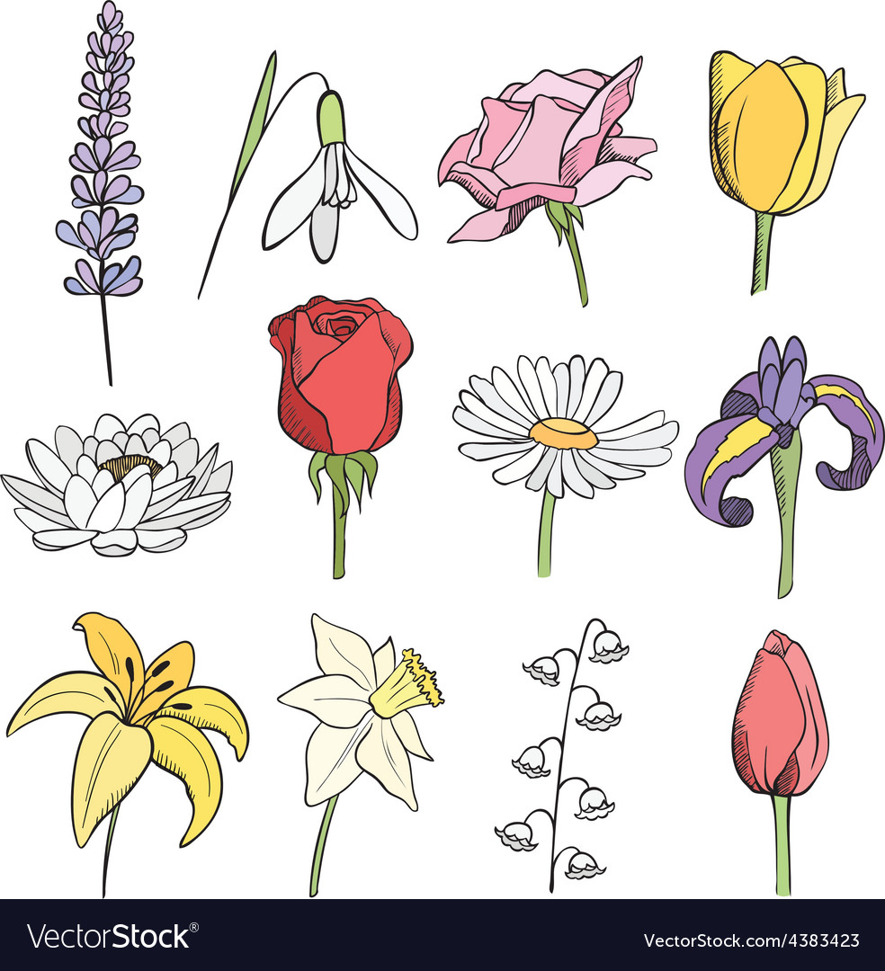 Many different flowers color collection vector