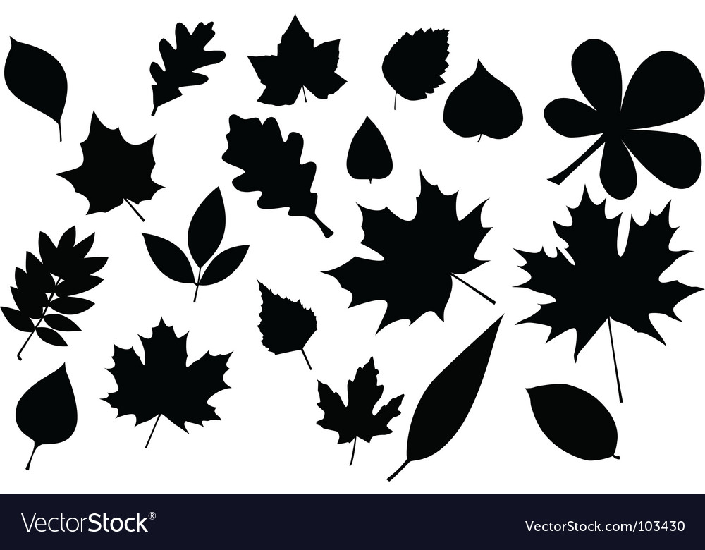 Leaves silhouette vector