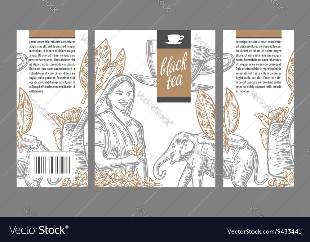 Tea picker woman tea leaves cup elephant vector