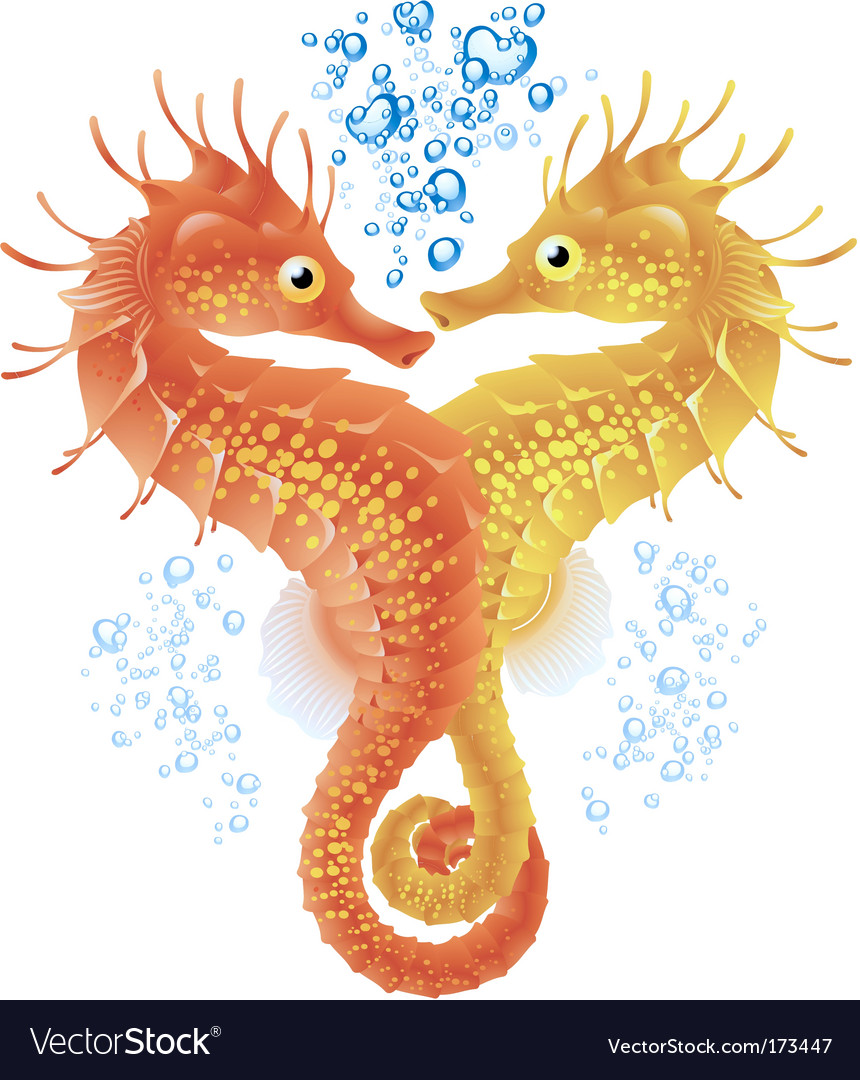 Seahorses in love vector
