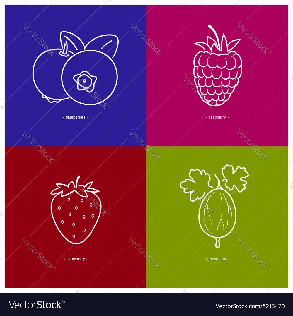 Strawberryraspberriesblueberriesgooseberry vector