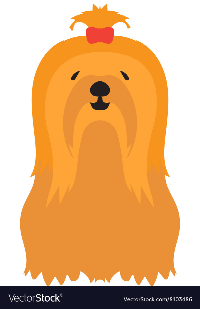 Adorable young lapdog yorkshire terrier vector