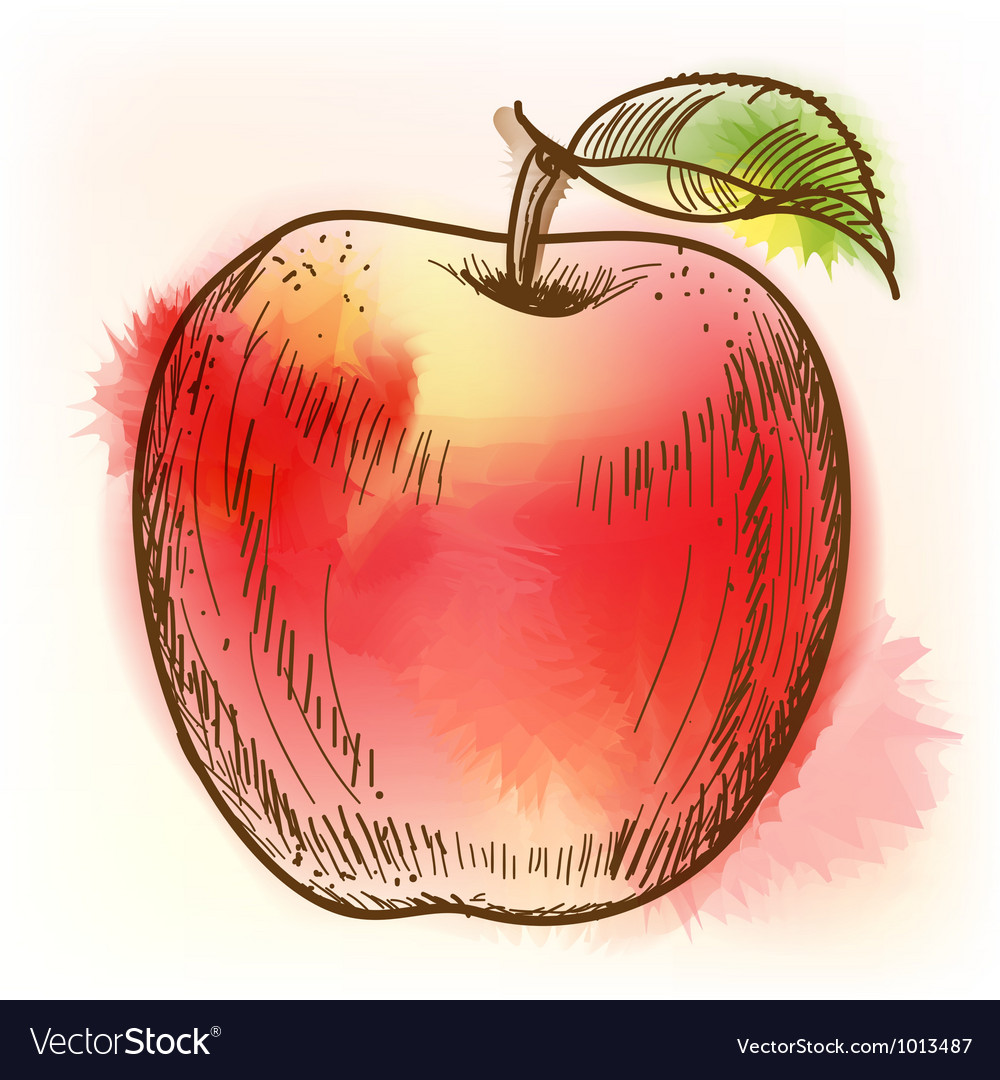 Red apple watercolor painting vector
