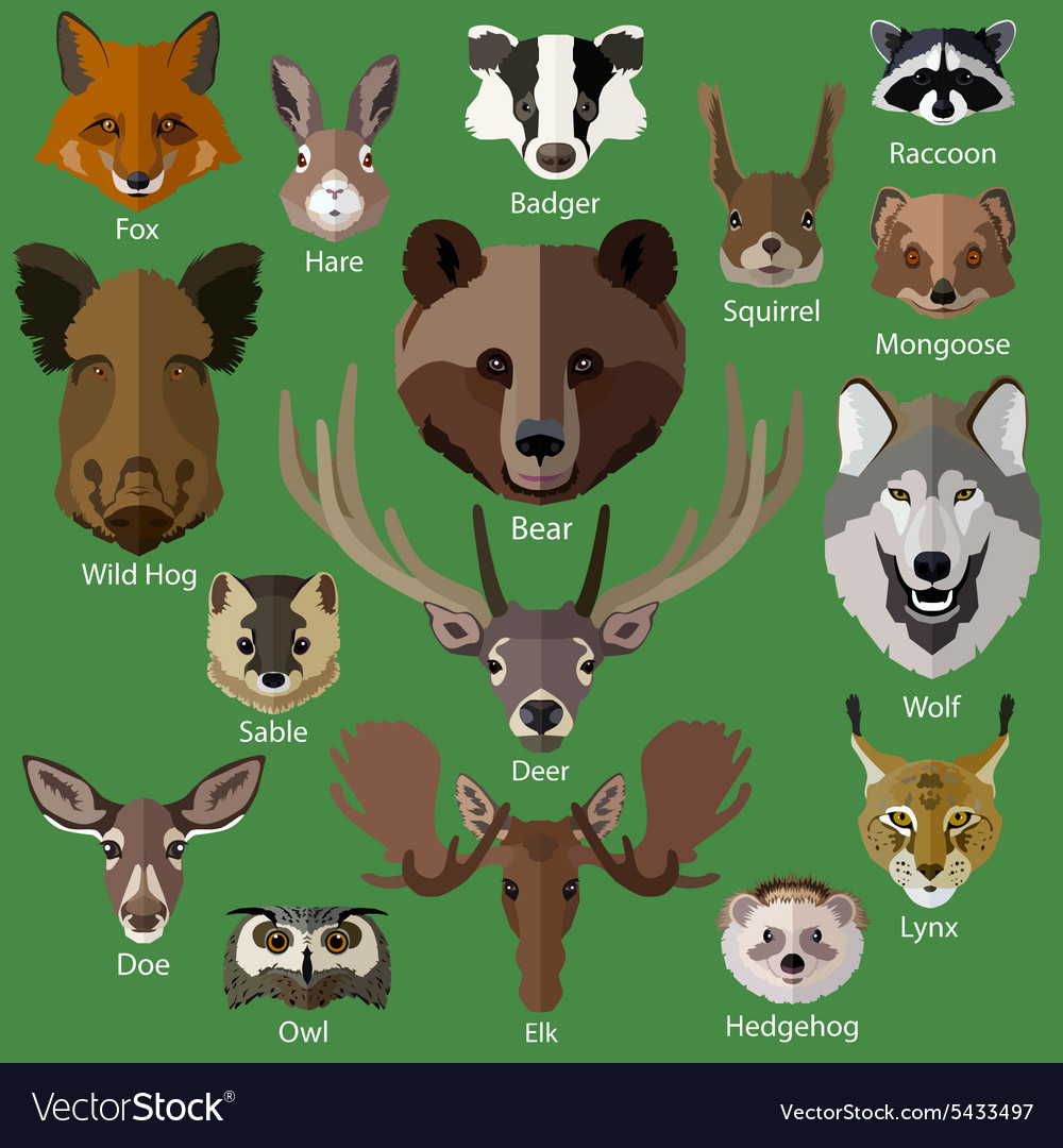 Set of forest animals faces isolated icons vector