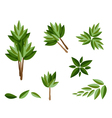 A Set of Isometric Evergreen Trees and Plants vector image vector image