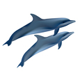 two dolphins on white background vector image vector image