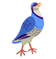 partridge vector image