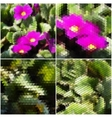 Pink flowers on the grass Collection of abstract vector image