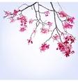 Spring Blooming Sakura branch of blots background vector image