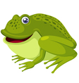 green frog vector image vector image