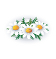 daisies vector image