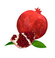 ripe red pomegranate and slices isolated on white vector image