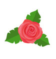 rose flower green leaves decorative sticker vector image